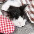 Sleeping kitten on blanket — Stock Photo