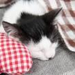 Sleeping kitten on blanket — Stock Photo