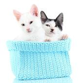 Deux petit chaton en bleu tricot panier isolé sur blanc — Photo