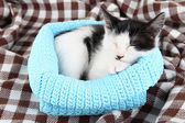 Small kitten in blue knitting basket on soft plaid — Stock Photo