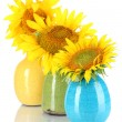 Beautiful sunflowers in color vases, isolated on white — Stock Photo