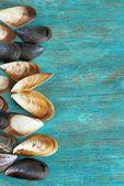 Sea seashells on blue wooden table close-up — Stock Photo