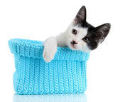 Small kitten in blue knitting basket isolated on white — Stock Photo