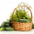 Fresh cucumbers and dill in basket isolated on white — Stock Photo
