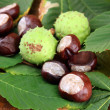 Chestnuts with leaves, on wooden background — Stock Photo