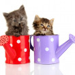 Small kittens sitting in watering can isolated on white — Stock Photo