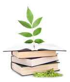 Books with plant isolated on white — Stock Photo