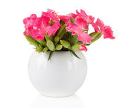 Bouquet of carnations in vase, isolated on white — Stock Photo