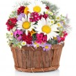 Beautiful bright flowers in wooden basket isolated on white — Stock Photo