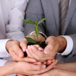 Business team holding together fresh green sprout closeup — Stock Photo #28314667