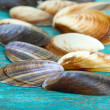 Sea seashells on blue wooden table close-up — Stock Photo
