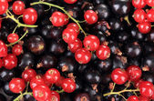Black and red currant, close up — Stock Photo