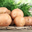 Potato and dill on wicker wooden tray on table on nature background — Stock Photo