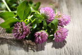 Clover flowers with leaves on wooden background — Stock Photo