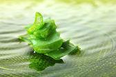 заделывают листьев свежего алоэ — Стоковое фото