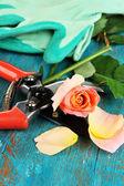 Tuin snoeischaren en rose op houten tafel close-up — Stockfoto