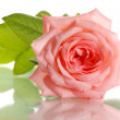 Pink rose isolated on whit — Stock Photo #28531491