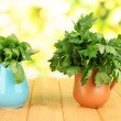 Fresh herbs in pitchers on wooden table on natural background — Stock Photo #28532323