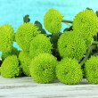 Beautiful green chrysanthemum on table on blue background — Stock Photo