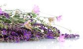 Wild flowers, isolated on white — Stock Photo