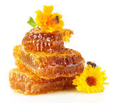 Sweet honeycomb with honey, bee and flowers, isolated on white — Stock Photo