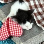 Sleeping kitten on blue carpet — Stock Photo