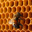 Yellow beautiful honeycomb with honey and bee, background — ストック写真