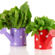 Fresh herbs in colorful watering cans isolated on white — Stock Photo