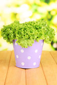 Fresh herb in colorful pail on wooden table on natural background — Stock Photo