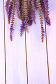Salvia blumen auf lila hölzernen hintergrund — Stockfoto