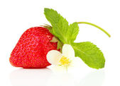 Ripe sweet strawberry and flower, isolated on white — Stock Photo
