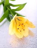 Beautiful orange lilies on wet background — Stock Photo