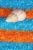 Shell en cristales colores de fondo de sal de mar — Foto de Stock