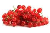 Red currant isolated on white — Stock Photo