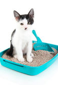Small kitten in blue plastic litter cat isolated on white — Stock Photo