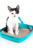 Small kitten in blue plastic litter cat isolated on white — Stock Photo