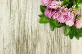 Clover flowers on wooden background — Stock Photo
