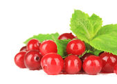 Ripe red cranberries, isolated on whit — Stock Photo