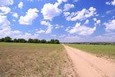Beautiful field — Stock Photo