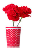 Bouquet of carnations in a glass isolated on white — Stock Photo