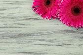 木製のテーブルに美しいピンク ガーベラ — ストック写真