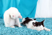 Washing and sleeping kitten on blue carpet — Stock Photo