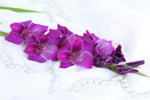 Beautiful gladiolus flower on white fabric background — Stock Photo