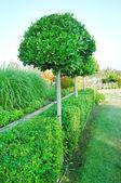 Paisagismo no jardim — Foto Stock