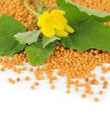 Mosterdzaad met mosterd bloem geïsoleerd op wit — Stockfoto