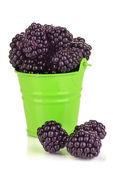 Doce blackberry no balde isolado no branco — Foto Stock