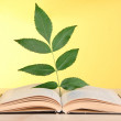 Book with plant on table on yellow background — Stock Photo