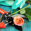 Garden secateurs and rose on wooden table close-up — Stockfoto