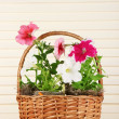 Petunias in pots in basket on wooden background — Stock Photo