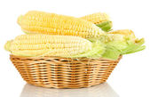 Fresh corn vegetable in basket isolated on white — Stock Photo